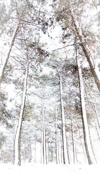 עצים בשלג
